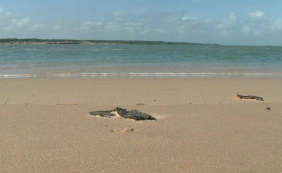 [Novas manchas de óleo aparecem no litoral do Piauí]