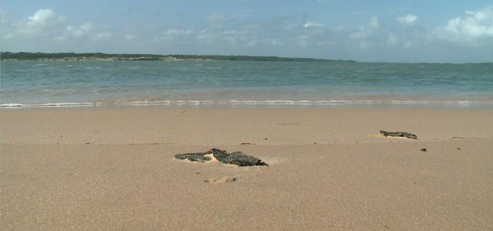 [Duas praias baianas ainda têm resíduos de óleo, diz Marinha]