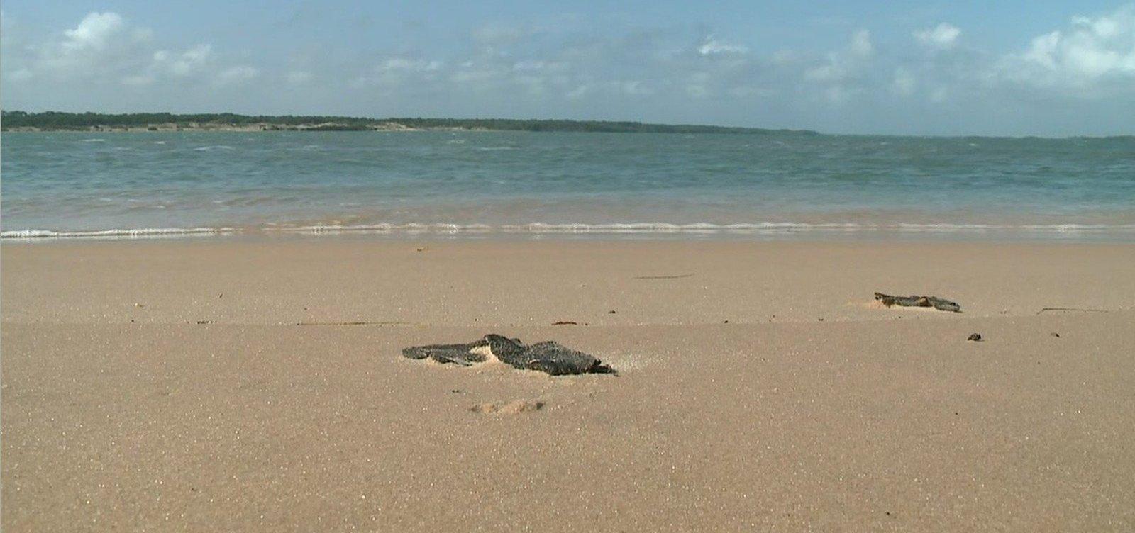 [Ufba: Número de animais vivos no litoral norte da Bahia reduziu em 65% após manchas de óleo]