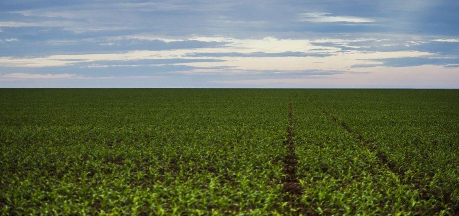 [Governo autoriza mais 57 agrotóxicos e total de registros chega a 439 só neste ano]