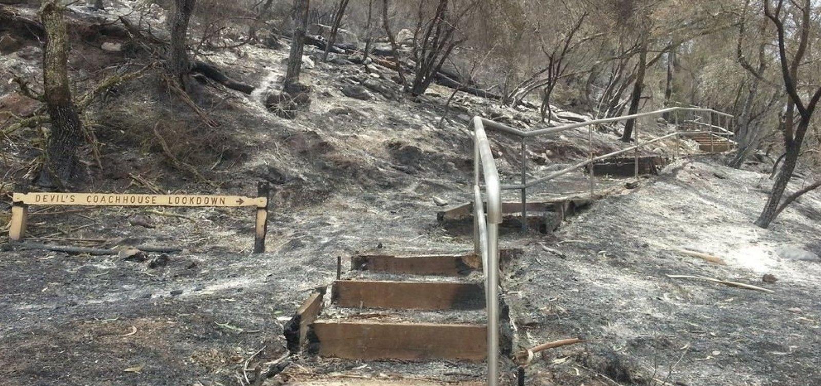[Austrália terá 1,2 bi de euros para recuperar áreas afetadas pelo fogo]