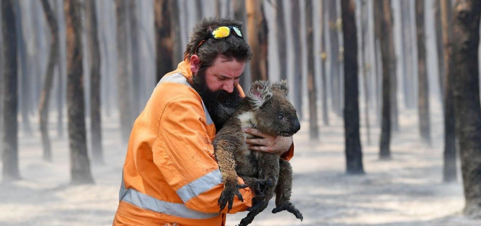 [Nasa divulga imagens da destruição de um terço da Ilha Kangaroo, na Austrália]