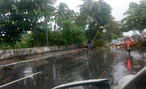 [Após fortes chuvas, árvores e coqueiros caem na Av General Severino Filho, em Itapuã]