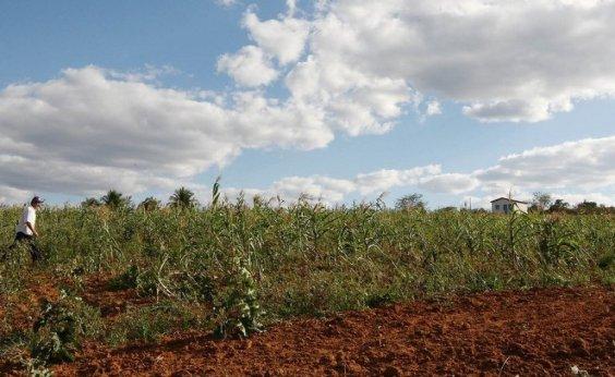 [Cidade baiana lidera produção agrícola no Brasil]