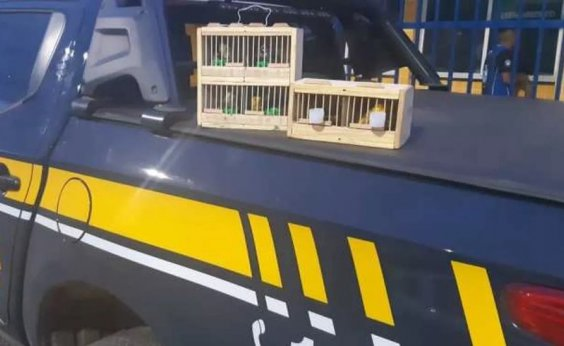 [Pássaros silvestres em situação de maus-tratos são resgatados em rodovias baianas]