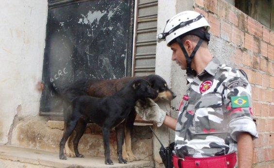 [HPET e Bombeiros Voluntários lançam campanha para arrecadar alimentos para animais de rua]