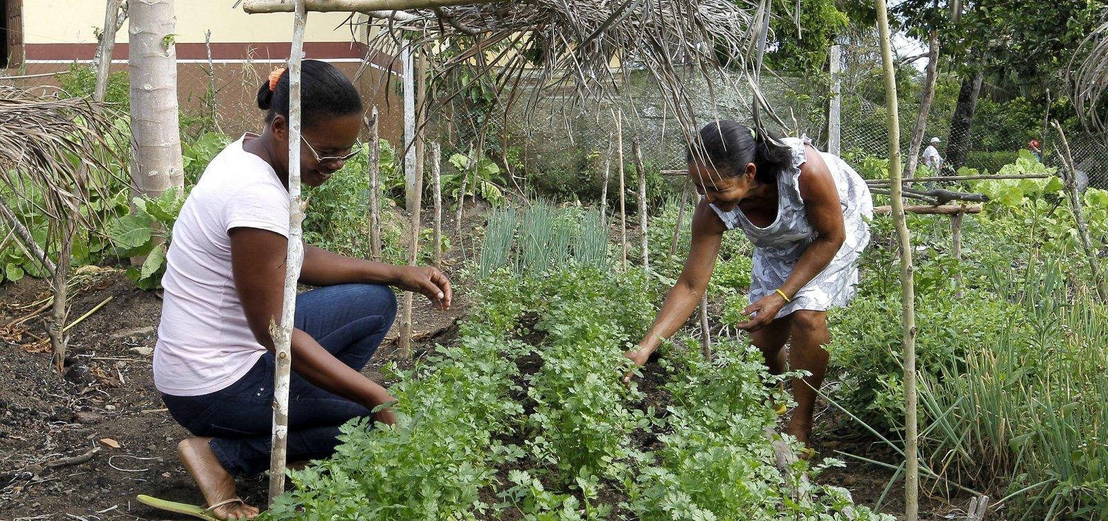 [Coronavírus: Governo da Bahia lança edital que destina R$ 15 mi a agricultores familiares]