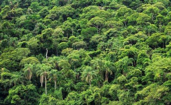 [Brasil foi responsável por um terço da perda de florestas virgens no mundo em 2019, diz relatório]
