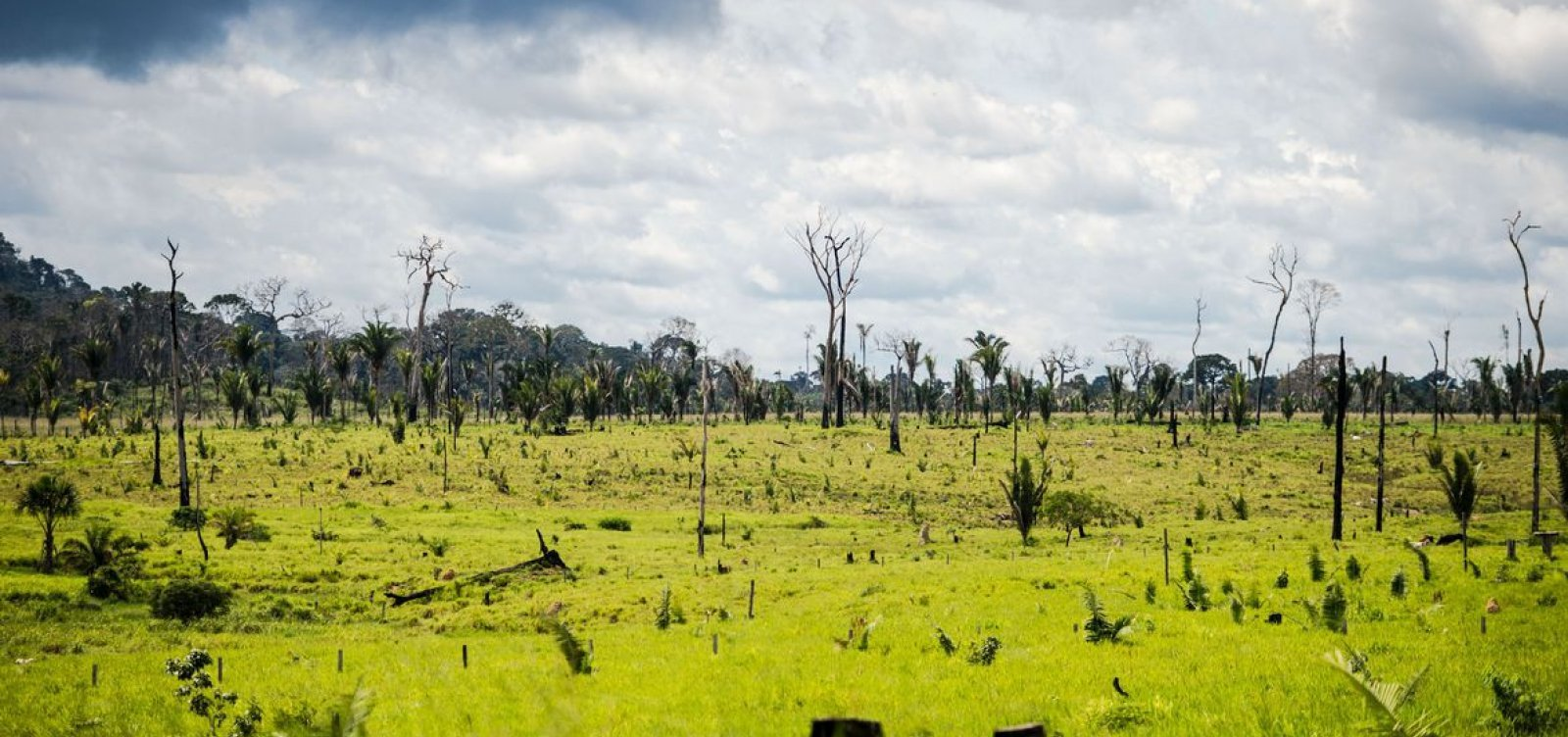[Governo prorroga decreto para proteção da Amazônia por mais um mês]