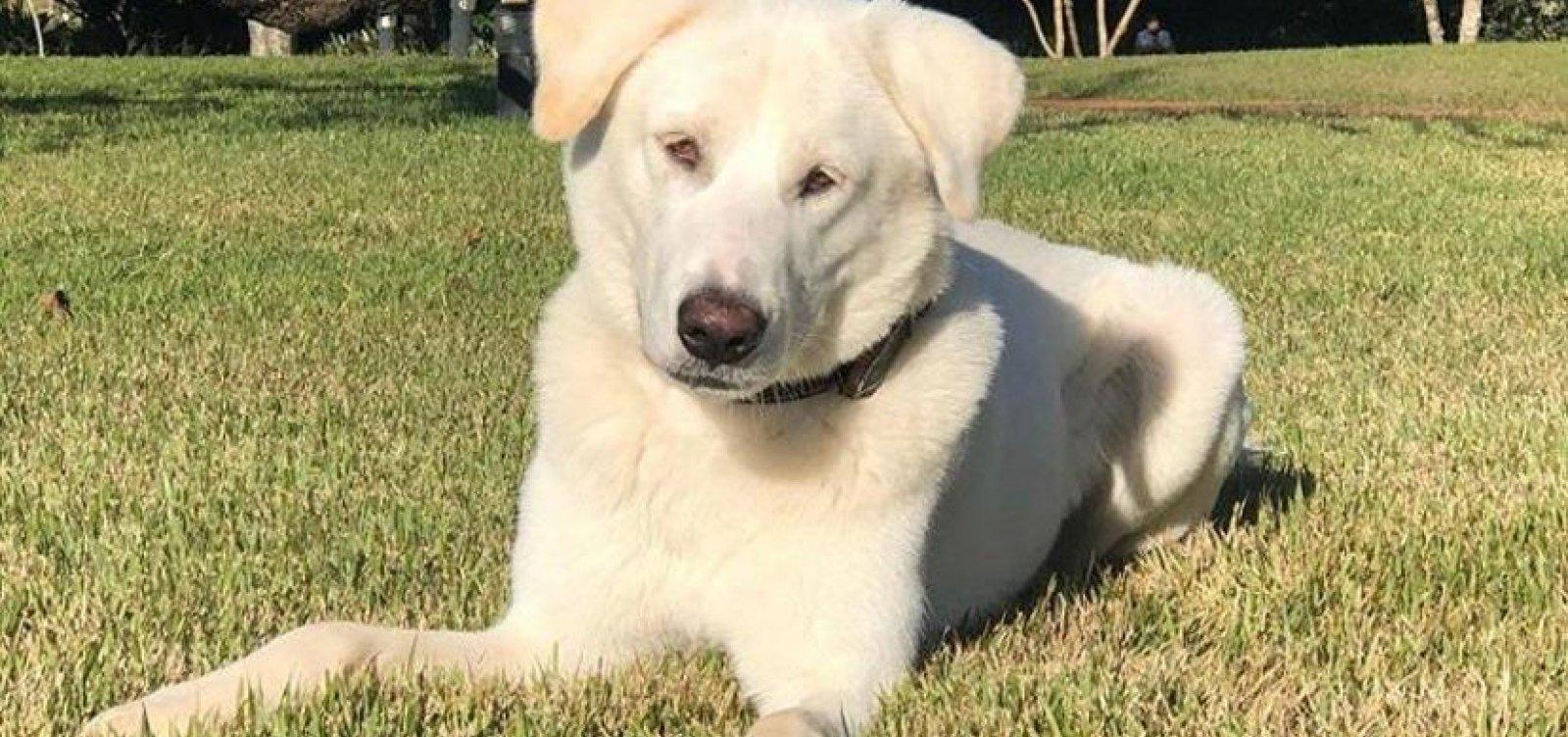 [Cachorro adotado por família Bolsonaro tinha dono e será devolvido]