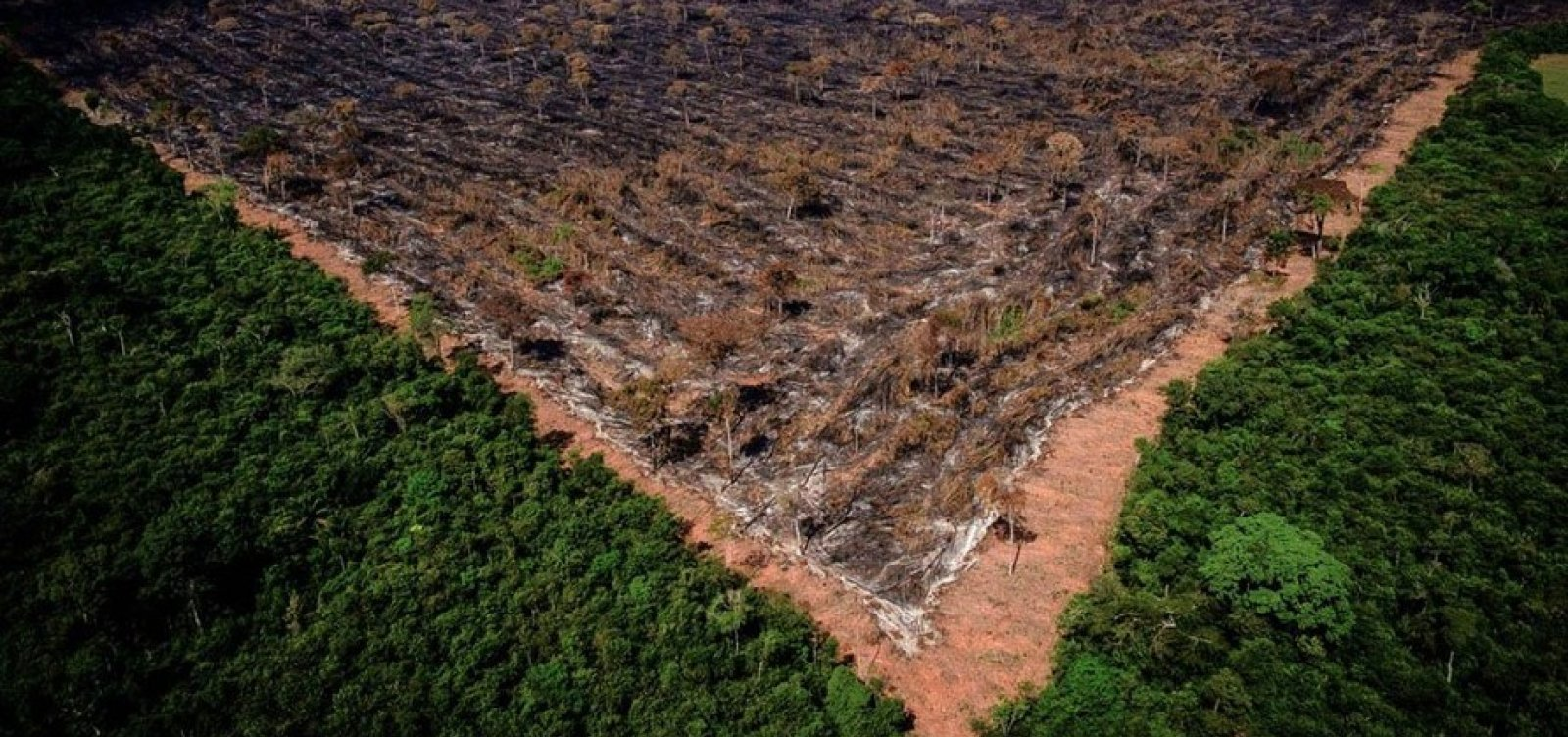 [Inpe alerta que desmatamento da Amazônia bate recorde em junho]