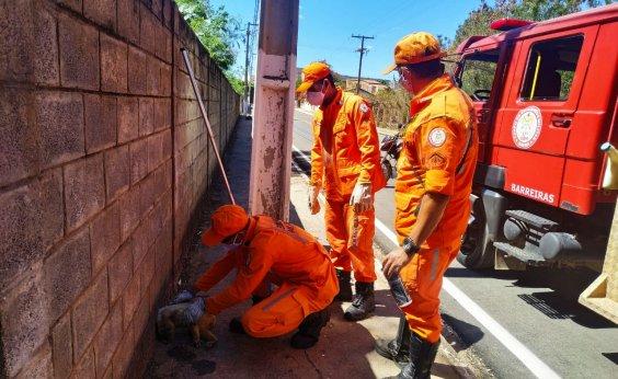 [Macaco é resgatado por bombeiros em rua de Barreiras]