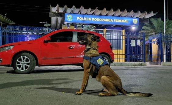 [Com ajuda de cão farejador, PRF apreende 18 kg de drogas e prende suspeito de tráfico]