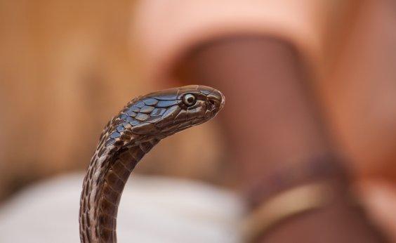 [Ufba já devolveu à natureza 50 serpentes desde início do isolamento social]