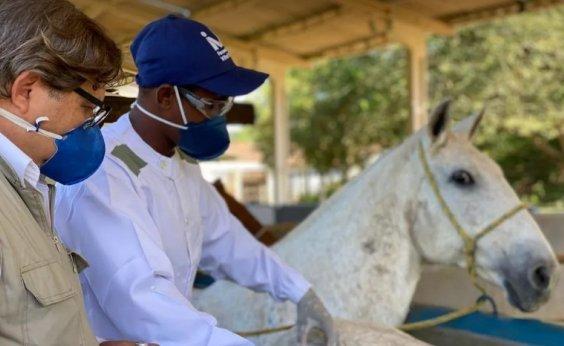 [Brasileiros descobrem que anticorpo de cavalos contra a Covid é até 50 vezes mais potente]