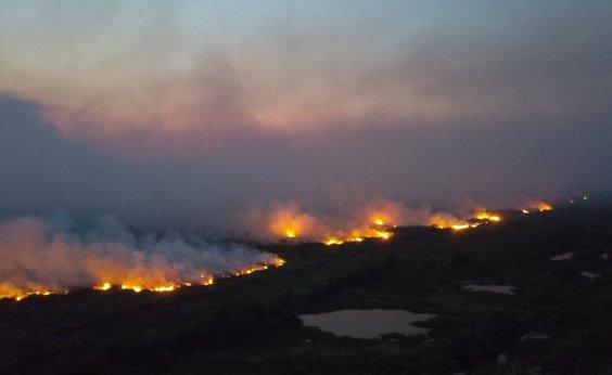 [Senado instala comissão para fiscalizar ações contra fogo no Pantanal]