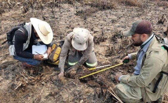 [Pantanal: Força-tarefa investiga número de animais mortos após queimadas]