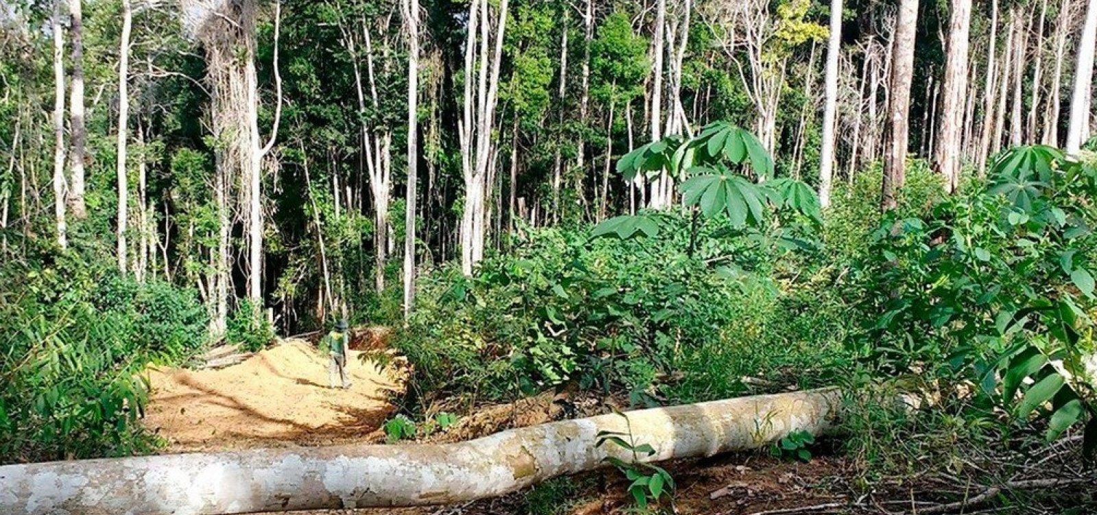 [Operação fiscaliza áreas desmatadas da Mata Atlântica na Bahia ]
