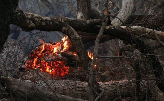 [Mato Grosso pede Força Nacional no combate às queimadas no Pantanal]