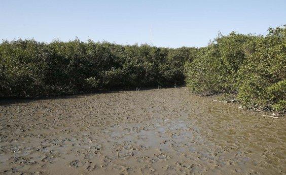 [Deputados apresentam projetos para anular decisão que elimina regras de proteção de manguezais]