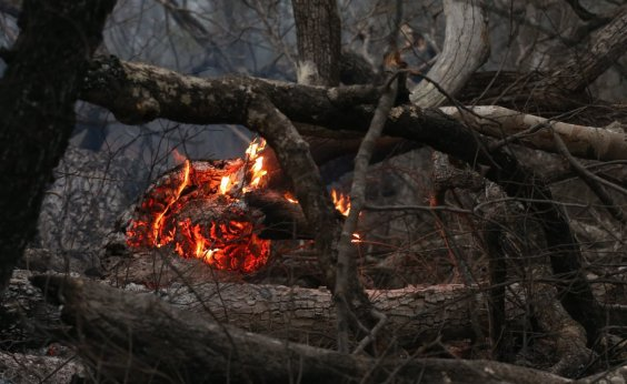 [Monitoramento da UFRJ aponta que chamas destruíram 23% do Pantanal de janeiro a setembro]