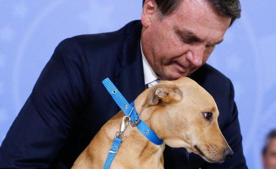 [Bolsonaro sanciona, sem vetos, lei que aumenta pena para quem maltratar cães e gatos]