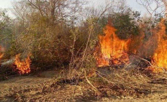 [Incêndio em Barra completa 15 dias e fogo chega nos limites de Morpará e Xique-Xique]