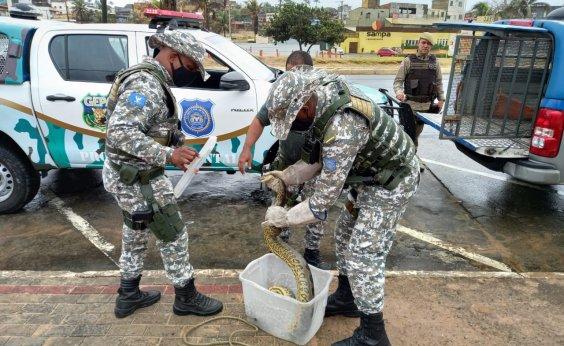 [Guarda Civil resgata mais dois animais silvestres na praia de Jaguaribe]