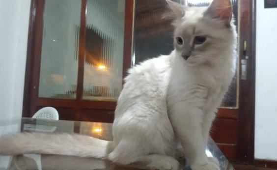[Brasil registra primeiro caso confirmado de gato com Covid-19]