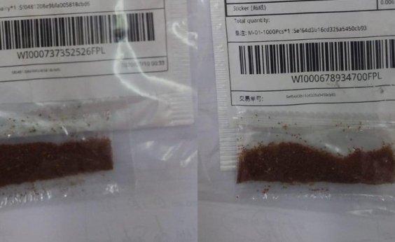 [Governo registra 525 casos de sementes misteriosas em todo o país]