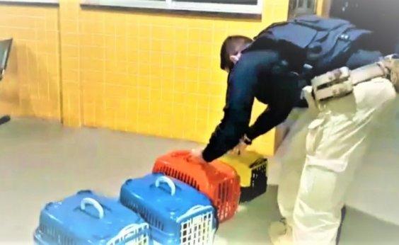[Filhotes de cães de raça são resgatados de bagageiro de ônibus na BR-242]