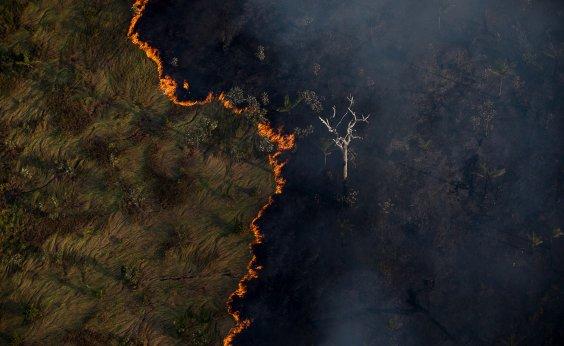 [Das quase mil autuações aplicadas pelo Ibama por desmate na Amazônia apenas três foram quitadas]